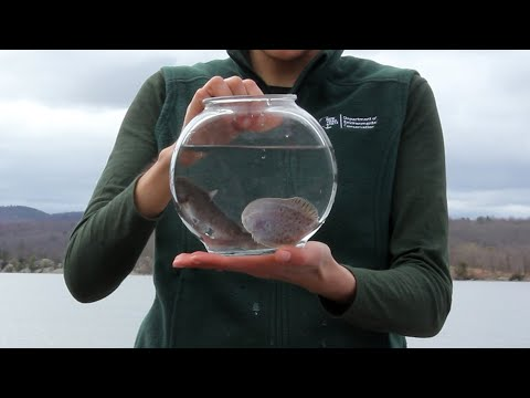 Identify Live Hudson River Fish
