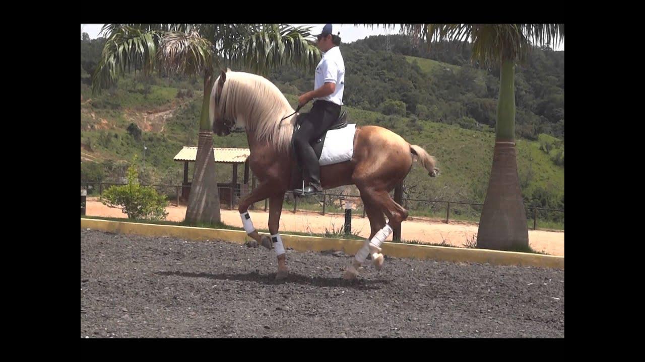 Malboa Cavalo Lusitano Palomino Hipica Rancho Novo Youtube