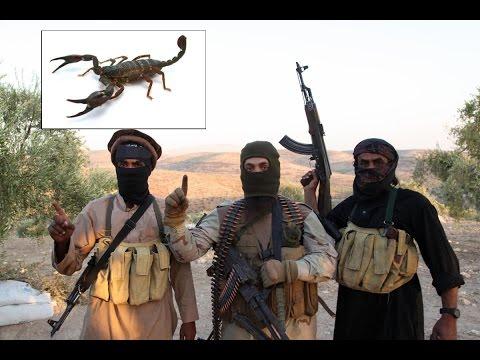 """أخبارعربية Arabic news - داعش يطلق قنابل """"عقارب"""" لزرع الرعب في العراق"""