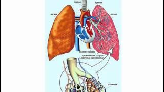 И Федощук  Дыхательная Система Человека 30 01 15