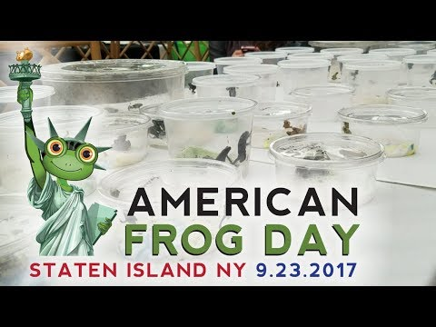 American Frog Day 2017 NYC