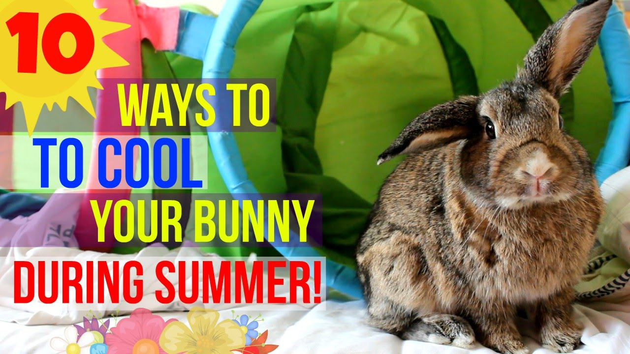 How to Keep Your Rabbits Cool on a Sunny Hot Day