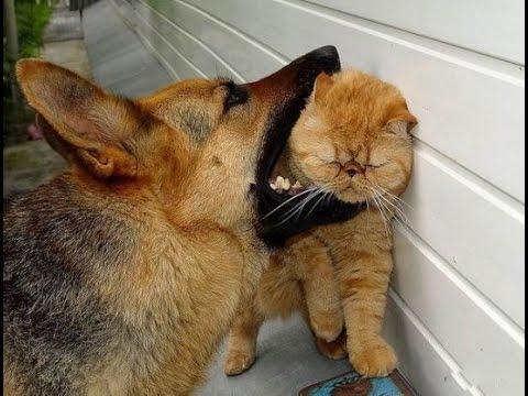 Кот с собакой драка