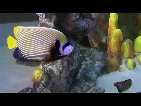 Inside video of Taraporewala Aquarium in Mumbai