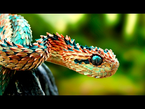 Amazing Animals With Unusual Superpowers - Wildlife Document