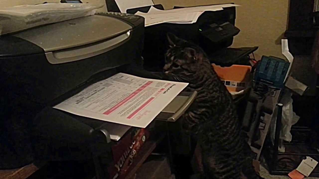 Реакция кота на печатающий принтер