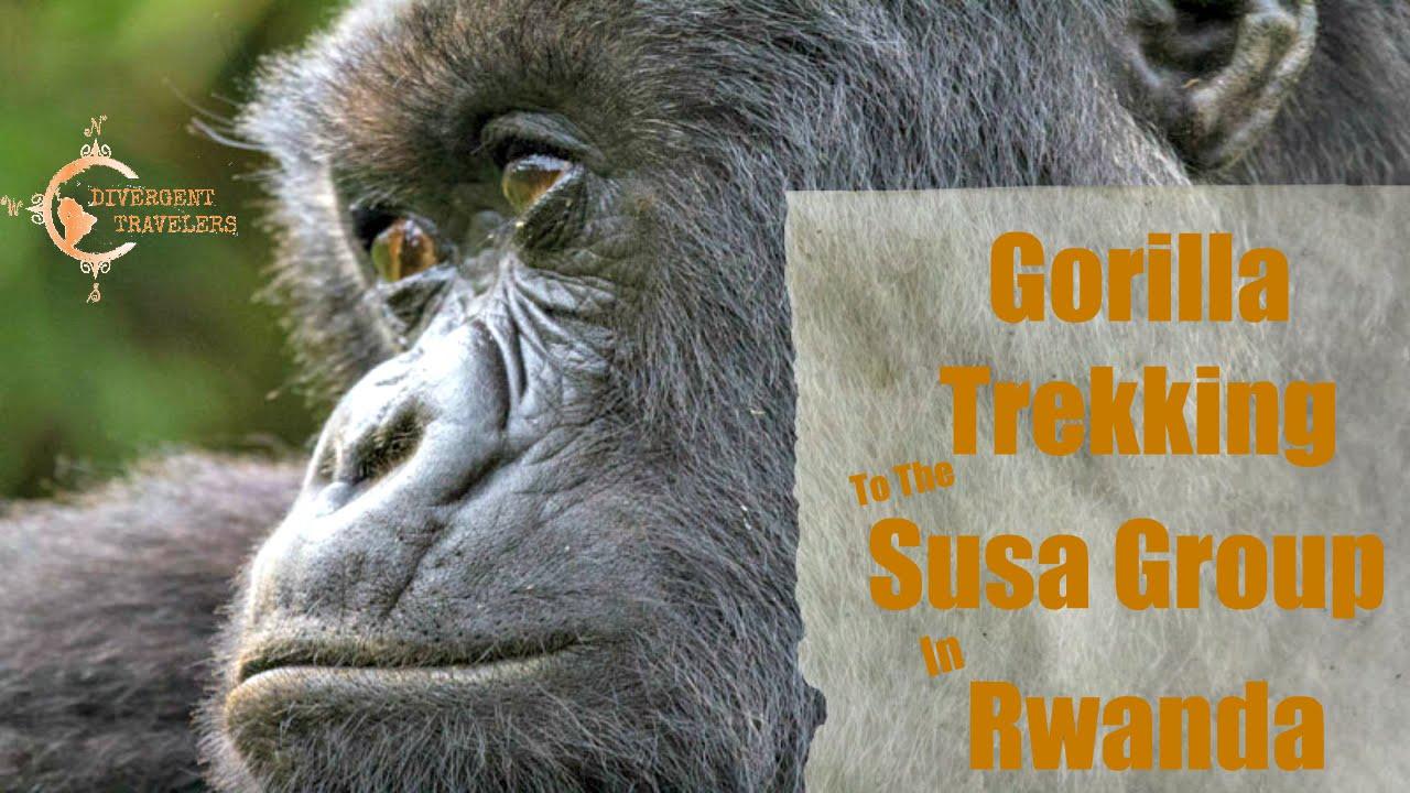 Gorilla Trekking, Susa Group Rwanda Made Famous By Dianne