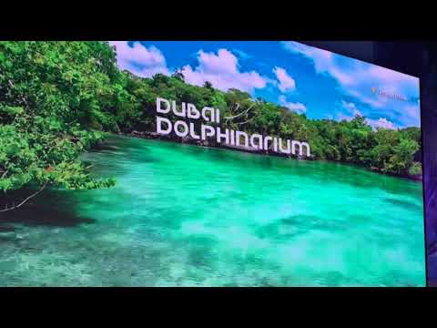 A day out with Anaiah | Dolphinarium + Children's City