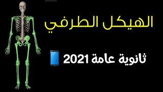 شرح الدعامة في الانسان (الهيكل الطرفي)/ ثانوية عامة 2021