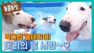 역대급 '물테리어' 테리의 못 말리는 물 사랑♡ I TV동물농장 (Animal Farm)   SBS Stor…