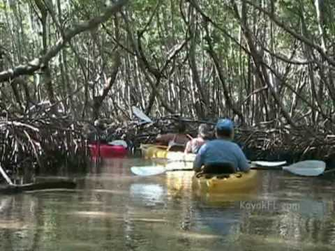 Almost Heaven Kayak Adventures South Lido Mangrove