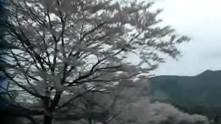 009.MOV:三重県いなべ市北勢町青川沿いの桜並木