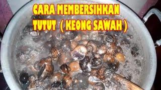 Download Video Cara Membersihkan Tutut / Keong Sawah Yang Benar Bersih Dari Lumpur Sawah..!! MP3 3GP MP4