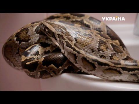Змея | Реальная мистика