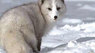 10 животных КАЗАХСТАН (красная книга)