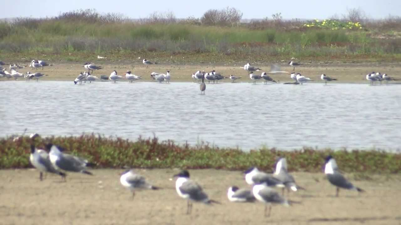 You're invited: Matagorda Bay Nature Park is a birdwatcher ...