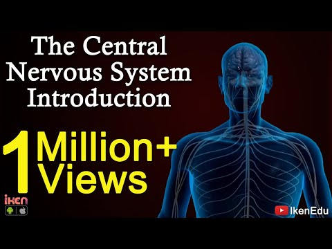 The Central Nervous System- Introduction - YouTube