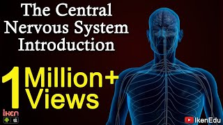 The Central Nervous System- Introduction