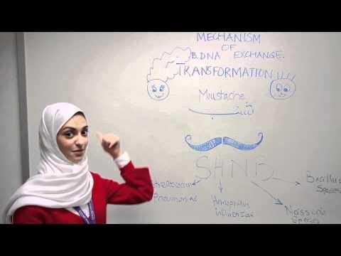 Bacterial Transformation - Arabic Mnemonic