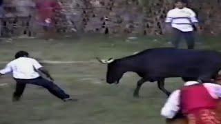 Funny Bull | Funny Bull attack | Funny Animal | Best Funny