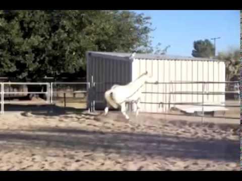 *~*Rest In Peace Jason 1987-2009*~* //No-longer riding horses//