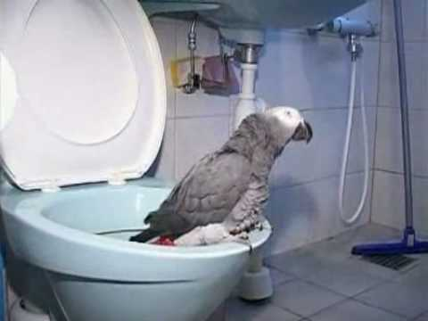 Potty trained parrot