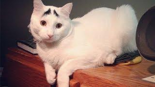 Cat compilation (2013 - 1st) подборка котов (2013 - 1я часть)