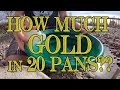 How Much Gold in 20 Pans?? Bonus - Gold Panning Demonstration