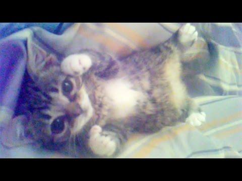 The BEST of BUB - From Kittenhood 'til Now