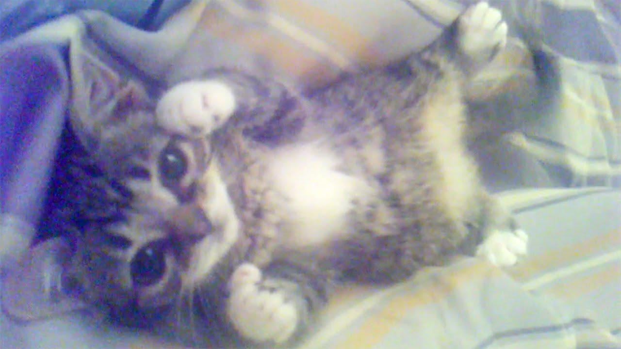 The Best Of Bub From Kittenhood Til Now Youtube