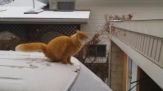 Cat fails - Кошачьи неудачи