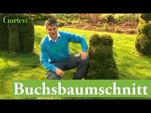 gartentipp buchsbaum schnitt youtube. Black Bedroom Furniture Sets. Home Design Ideas