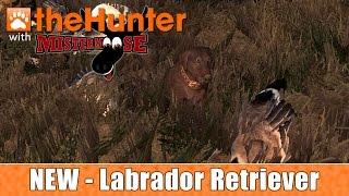 The Hunter - The Labrador Retriever