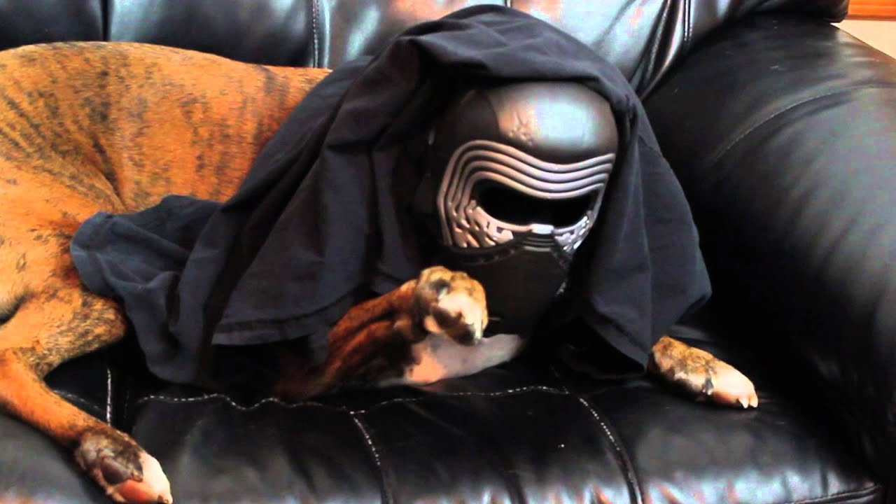 brock the boxer dog using the force star wars the force awakens youtube. Black Bedroom Furniture Sets. Home Design Ideas