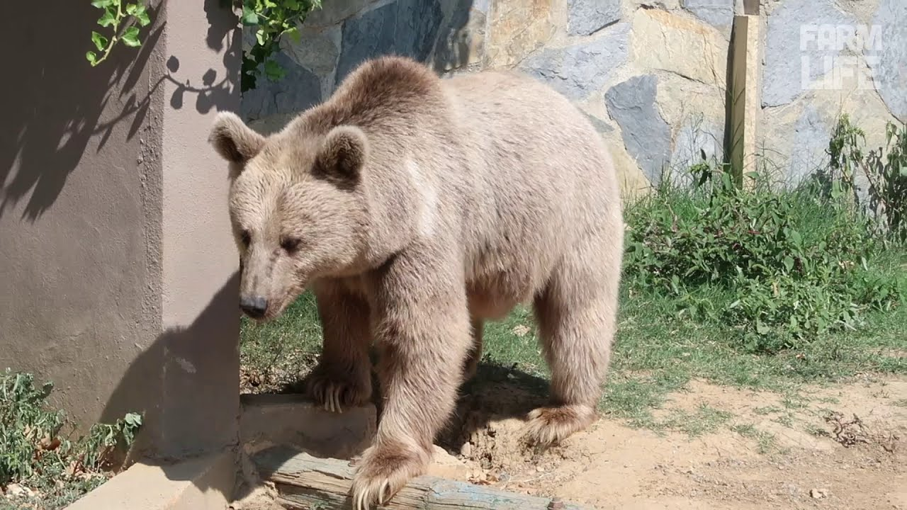 Image result for bear with gorilla