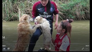 Wow Amazing Beautiful Girl Playing With Dog   Smart & Funny Dog cat Part12