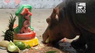 Happy Birthday Baby Hippo Fiona - Cincinnati Zoo