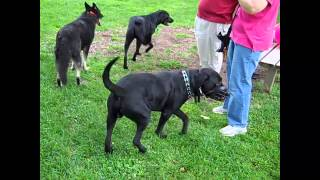 Argo At The Dog Park