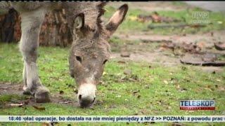 POZNAŃ: Nie dokarmiać zwierząt w ZOO! Mogą nie przeżyć!