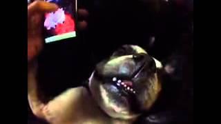 Как правильно будить собаку Кормушка Уникальное Фото Видео Приколы Гифки