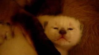 Katzenbabys öffnen ihre Augen 10.Tag