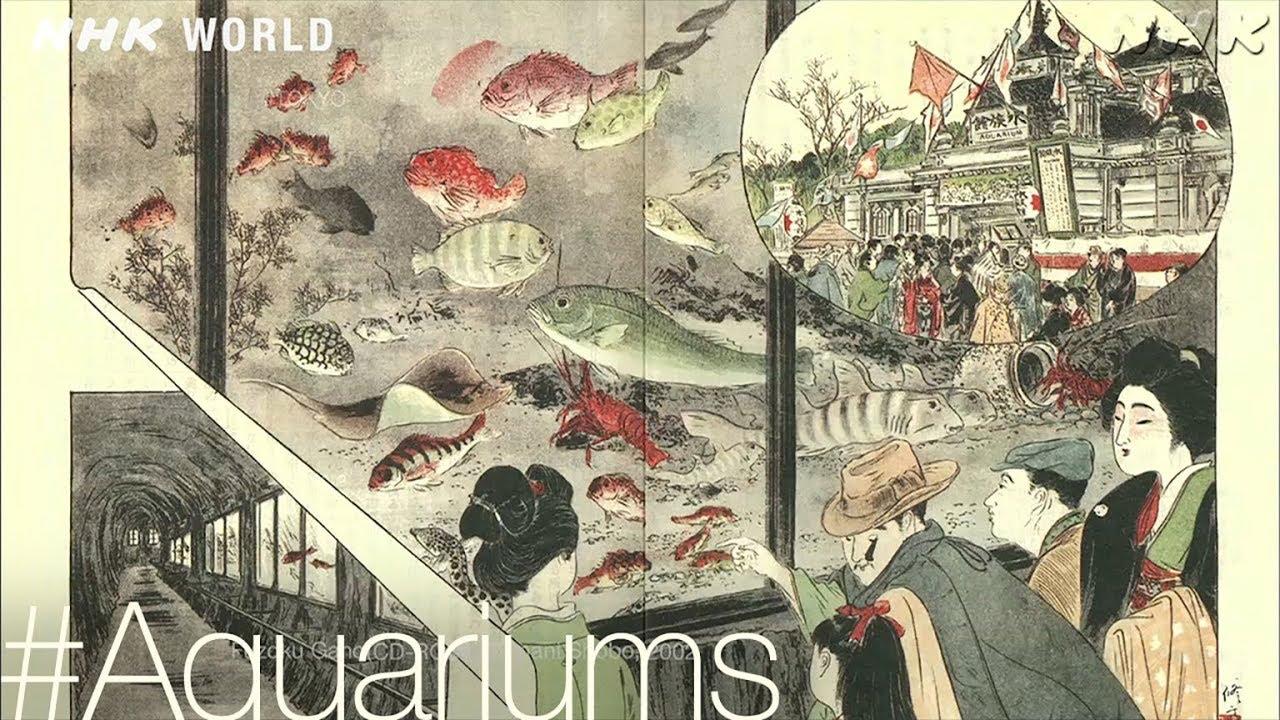 Photo of A Brief History [Aquariums] – #TOKYO [Japan] – video