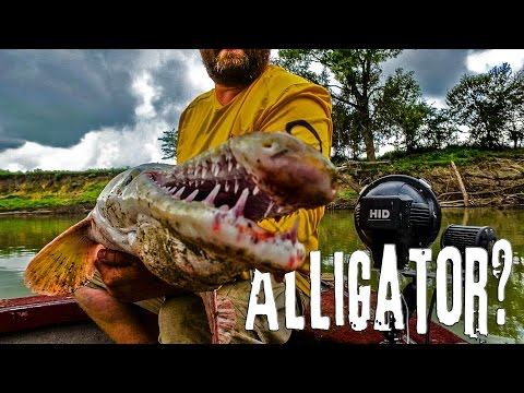 GOT TEETH?? Alligator Gar: Trinity River, Texas - Northwoods Angling