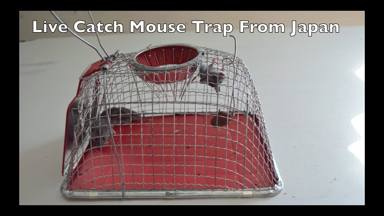 e46eeff078e An Unusual Mouse Trap From Japan - In Action. - YouTube
