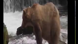 North America Wildlife