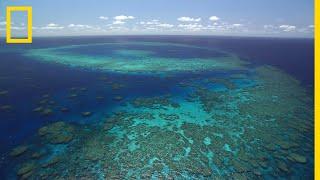 Nagy-korallztony National Geographic