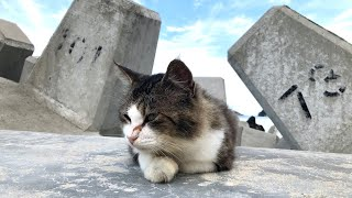 Japan's Cat Island | More Cats Than Humans