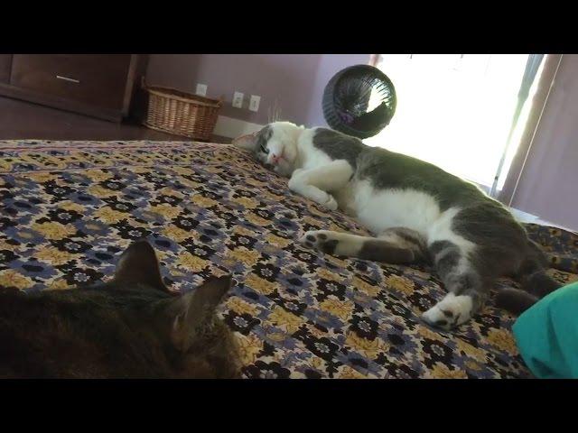 How Do You Like Meow: Meatball, Tamale, Snowman, and Sebastian