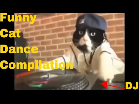 Funny Cat Dance Compilation - Cat Vines Try Not To Laugh - Funny Cat Videos 2016