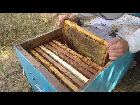Вопрос: Сколько меда приносит один полевой шмель за летний сезон?